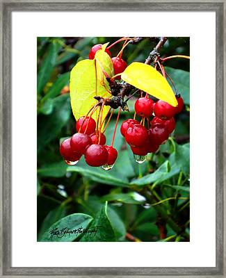 Drips And Berries Framed Print by Ruth Bodycott