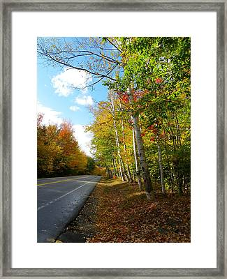 Driving Though The Birches Framed Print