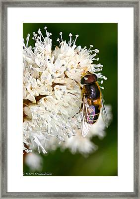 Framed Print featuring the photograph Drone Fly by Mitch Shindelbower