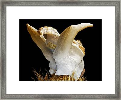 Drone Honeybee Penis, Coloured Sem Framed Print by Power And Syred