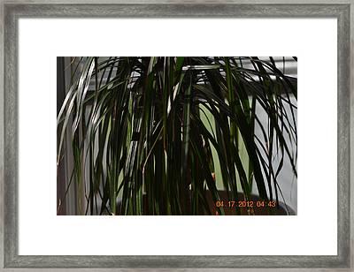 Drooping Tree Leaves Framed Print by Heidi Frye