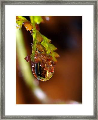 Drop Framed Print by Ian Flear
