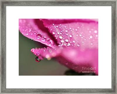 Droplet On Rose Petal Framed Print
