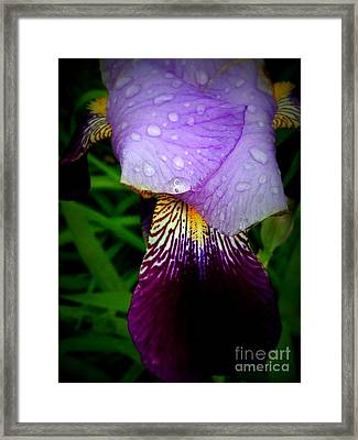 Droplets On Flower Framed Print by Deborah Selib-Haig DMacq