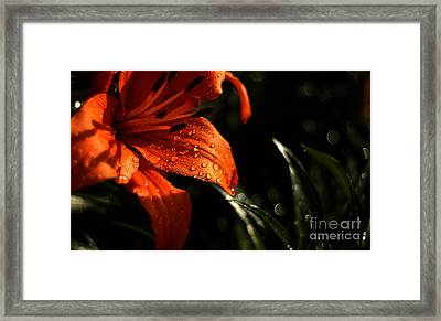 Framed Print featuring the photograph Droplets On Flower by Vilas Malankar