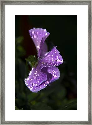 Drops Of Rain Framed Print by Svetlana Sewell
