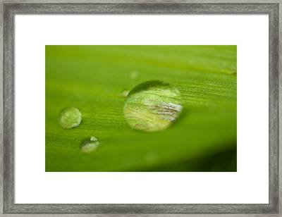 Drops Of Spring Framed Print