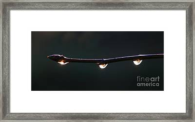Drops Of Sunrise Framed Print by Erica Hanel