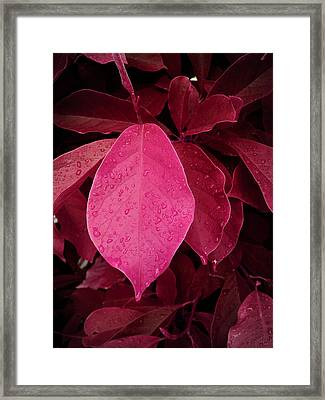Drops On Red Framed Print by Nafets Nuarb