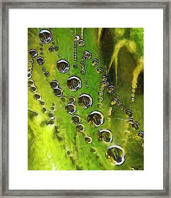 Drops On Spiderweb Framed Print by Odon Czintos