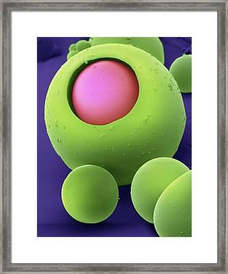 Drug Delivery Microspheres, Sem Framed Print by David Mccarthy