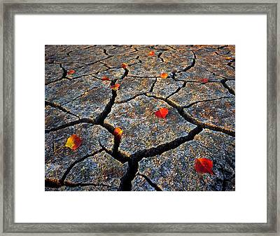 Dry Autumn Framed Print by Mike Norton