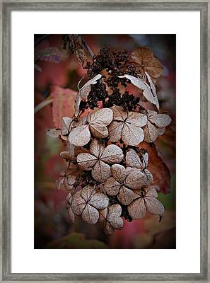 Dry Bloom Framed Print by Beverly Hammond