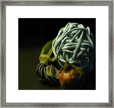 Dry Flower 2 Framed Print by Davor Sintic
