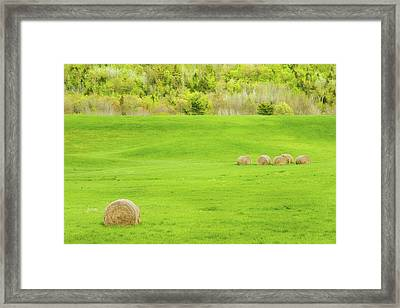 Dry Hay Bales In Spring Farm Field Maine Photo Framed Print