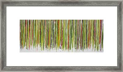 D.s. Color Band Framed Print