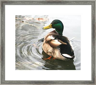 Duck Beauty Framed Print by Valia Bradshaw
