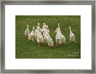 Duck Charge Framed Print