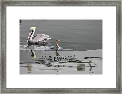 Duck Crossing Framed Print by Deborah Hughes