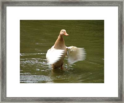 Duck Flapper Framed Print