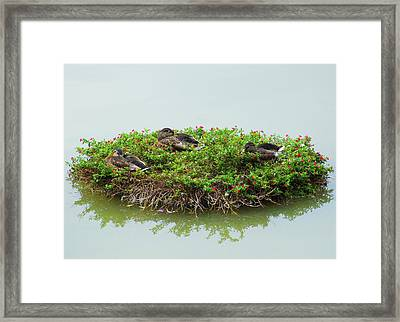 Duck Heaven Framed Print