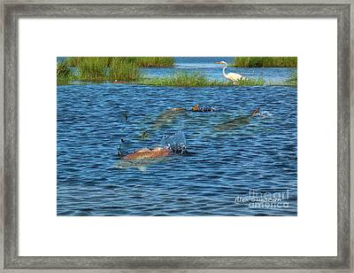 Duck Pond Reds Framed Print by Alex Suescun
