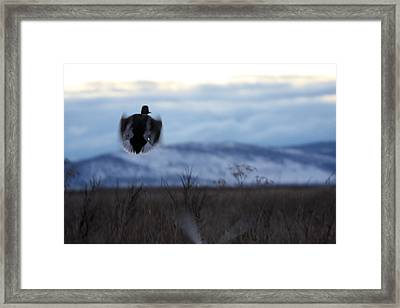 Duck Silhouette - 0001 Framed Print by S and S Photo