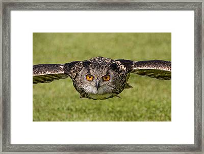 Duck Framed Print by Val Saxby