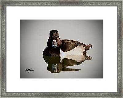 Duck With Attitude Framed Print by Jeff Swanson