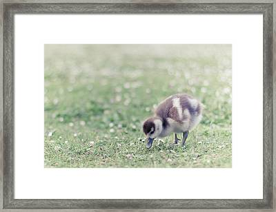 Duckling In Grass Field Framed Print by Cindy Prins