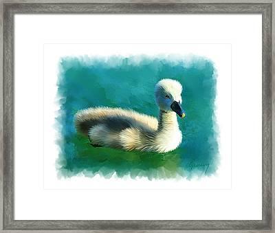 Duckling Framed Print by Michael Greenaway