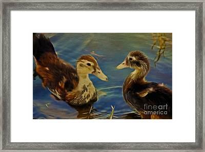 Duckling Playmates Framed Print by Deborah Benoit