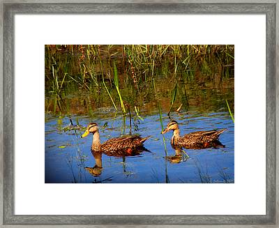 Ducks Afloat Framed Print