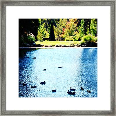 Ducks Framed Print by HD Connelly