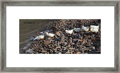 Framed Print featuring the photograph Ducks In A Row by Brian Stevens