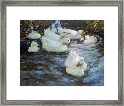 Ducks On A Pond Framed Print by Photos.com