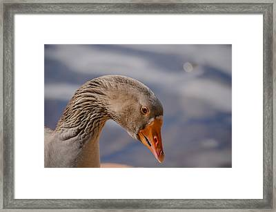 Duck's Portrait Framed Print by Joab Souza