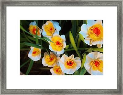 Ducktape Beauties Framed Print by Laura  Grisham