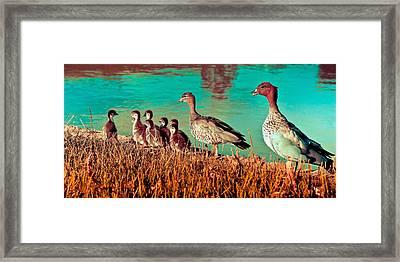 Ducky Family Framed Print by Bernard Yong