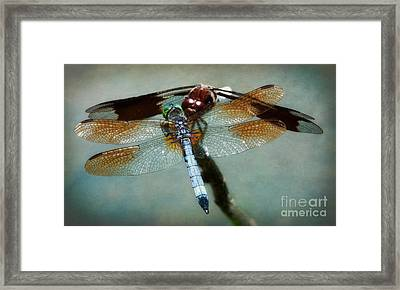 Dueling Dragonflies Framed Print by Susan Isakson