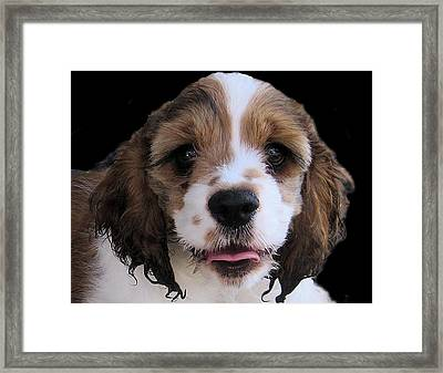 Duffy Framed Print by Patrick Keigher