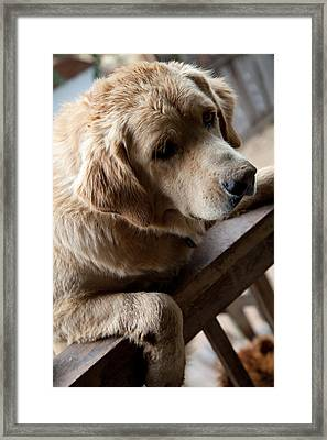 Duke Framed Print