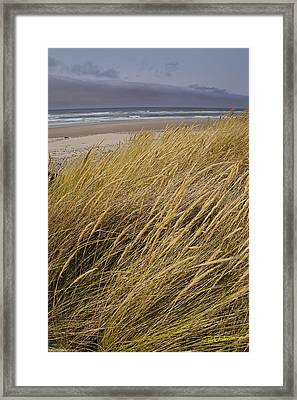 Framed Print featuring the photograph Dune Grass On The Oregon Coast by Mick Anderson