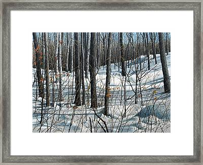 Durham Forest Framed Print