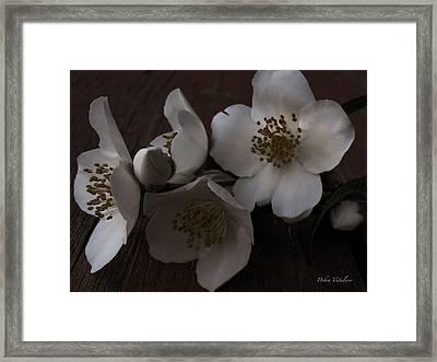 Dusk Blooms Framed Print by Debra     Vatalaro