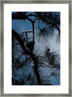 Framed Print featuring the photograph Dusk by Joseph Yarbrough