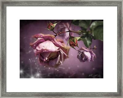 Dusky Pink Roses Framed Print by Svetlana Sewell