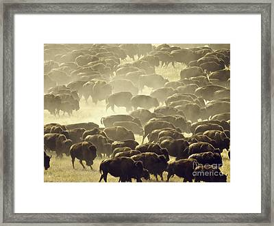 Dust And Hooves Framed Print