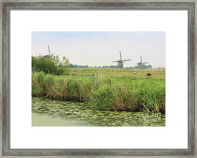 Dutch Landscape With Windmills And Cows Framed Print by Carol Groenen