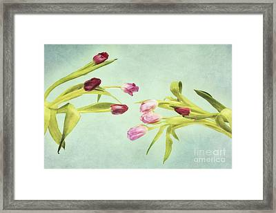 Eager For Spring Framed Print by Priska Wettstein